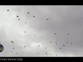 نماهنگ «گره گشا» با نوای سید رضا نریمانی